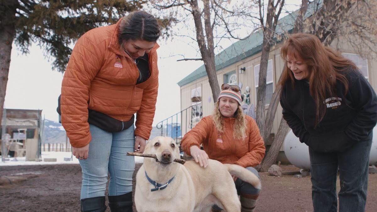 Still frame from the Animal Shelter's Story Film